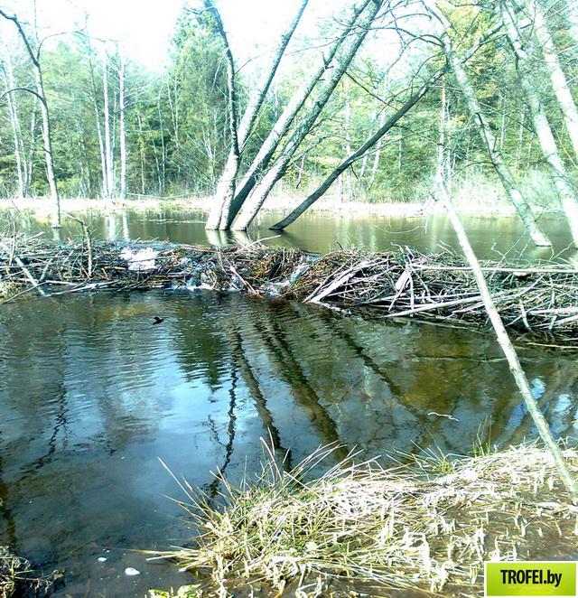 река Деревянка