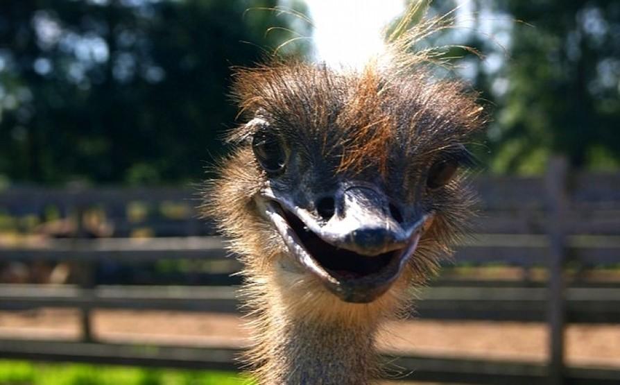 последние годы страусиная ферма курган официальный сайт фото описывает